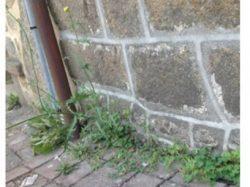 Entretien des pieds de mur