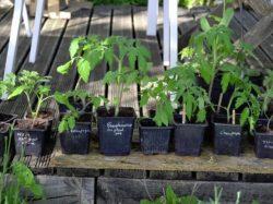 CSI : recherche de bénévoles pour le troc de plants